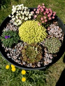 Alpine trough mark II